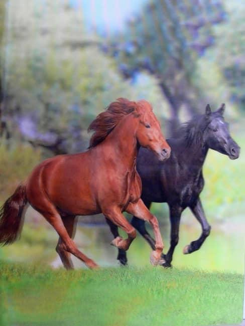 Katalogová kniha,20listů,motiv koně,3D efekt