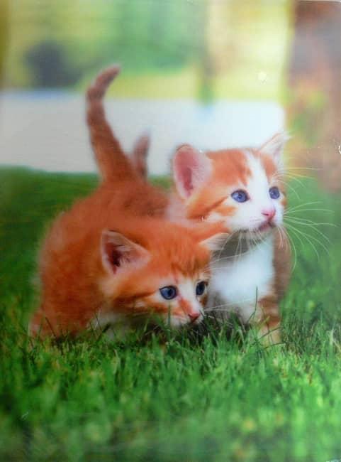 Katalogová kniha,20listů,motiv koťata,3D efekt