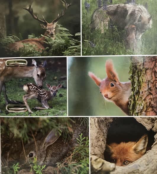 Designový pákový pořadač A4 7cm karton motiv Animals - les