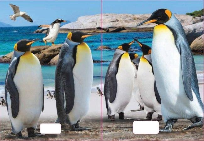 sešit 544 s 3D motivem, A5, 40 listů,linkovaný, motiv tučňáci